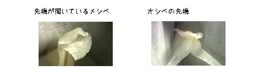 e0255509_227839.jpg