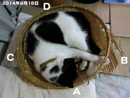 c0211810_9104962.jpg
