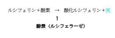c0180460_14194347.jpg
