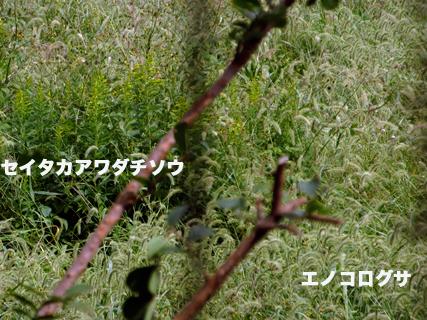 c0211810_8442065.jpg