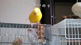 c0322903_23315800.jpg