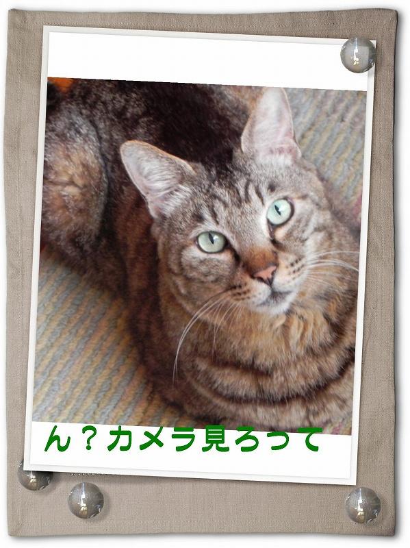 c0166666_1963131.jpg
