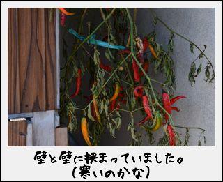 c0259934_92941.jpg