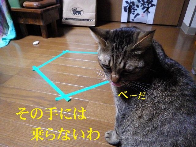 a0159490_15184810.jpg