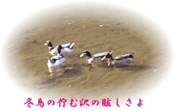 c0025171_1554395.jpg