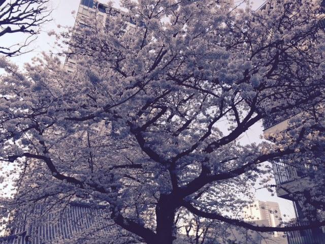 c0189469_201106.jpg