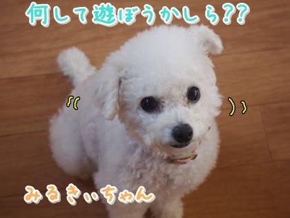 a0338800_11415486.jpg