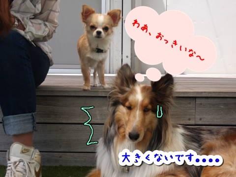 a0338800_20092255.jpg