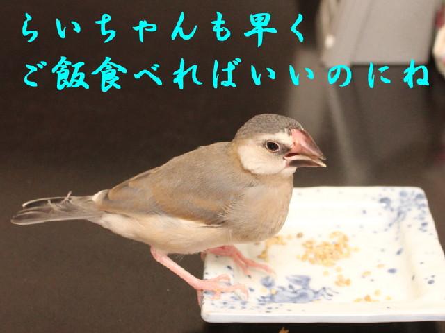 c0365734_21481212.jpg