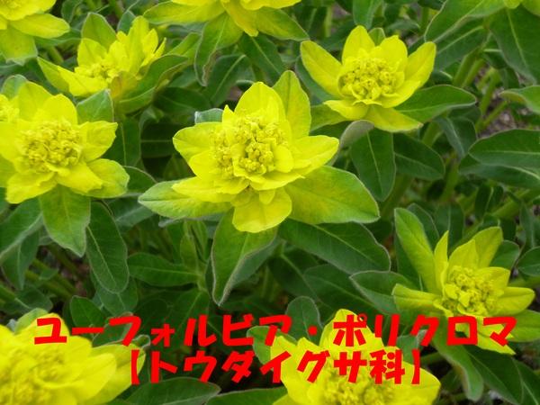 c0233141_11255740.jpg