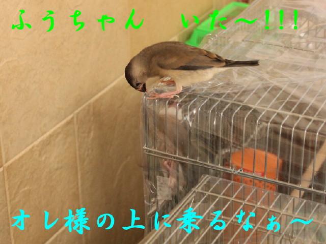 c0365734_20334013.jpg