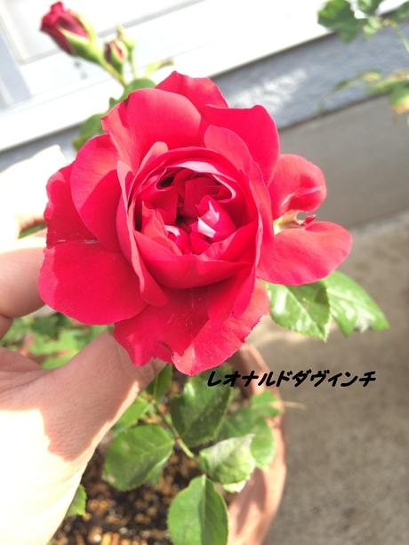 c0283778_11254543.jpg
