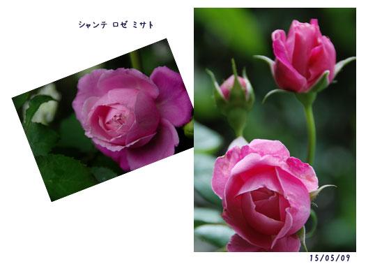 c0051105_04966.jpg