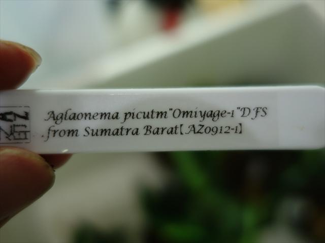 a0067578_6503632.jpg