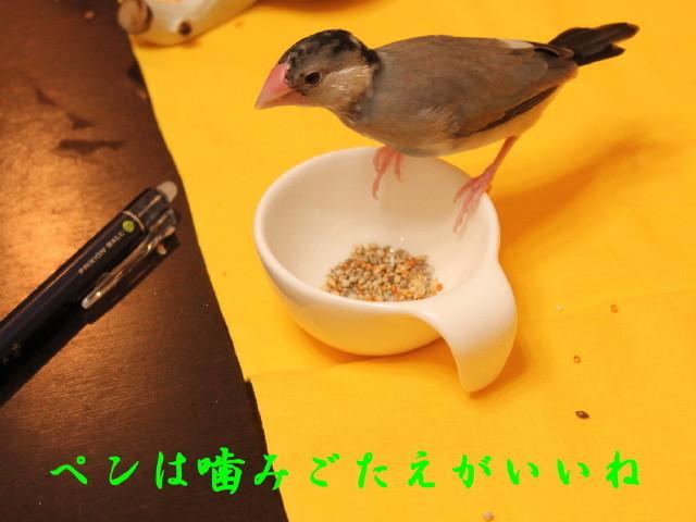 c0365734_22501181.jpg