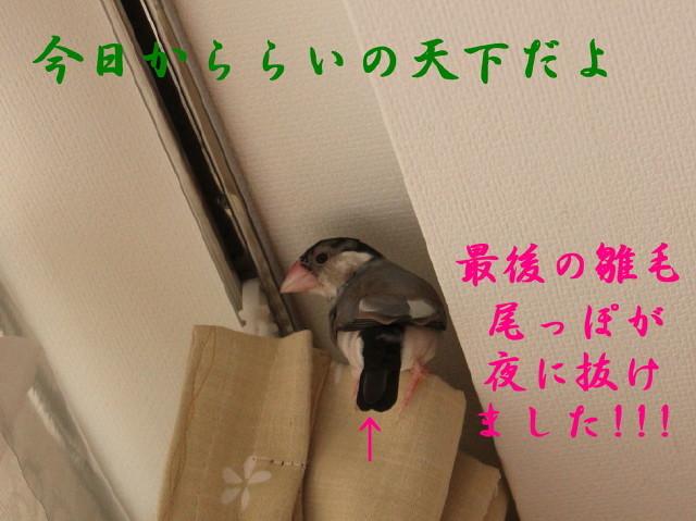 c0365734_20133952.jpg