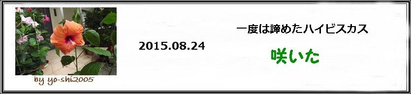 e0033229_19371436.jpg