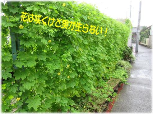 c0058727_14225027.jpg