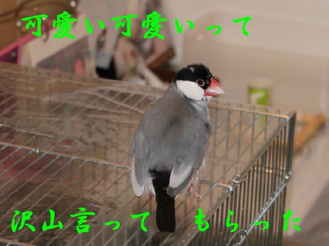 c0365734_23012107.jpg