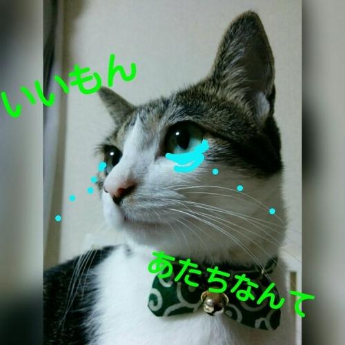 a0289878_12532492.jpg