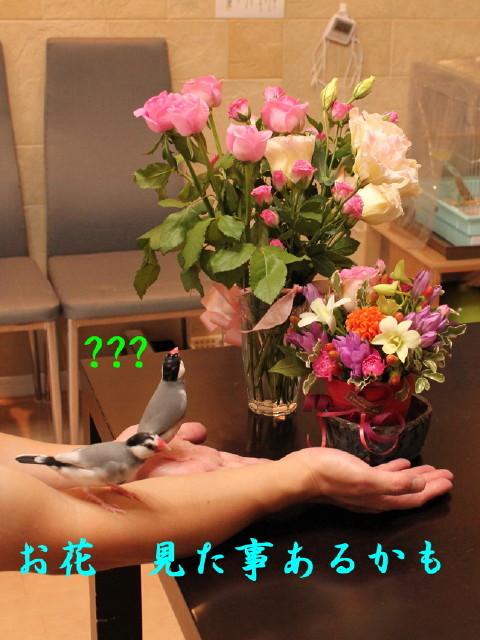 c0365734_20581642.jpg