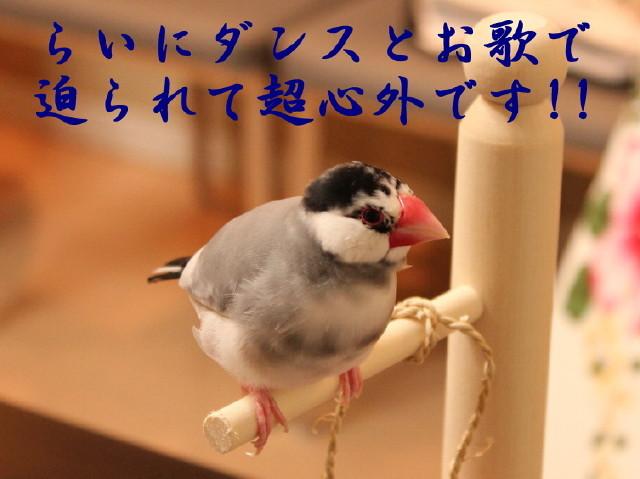 c0365734_22294369.jpg