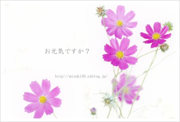 c0091505_1891035.jpg