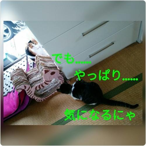 a0289878_16562437.jpg