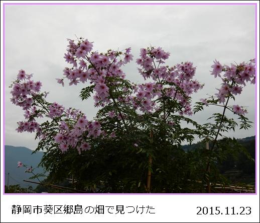 e0033229_191587.jpg