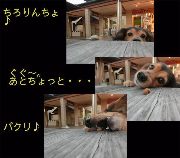 a0249004_16593735.jpg