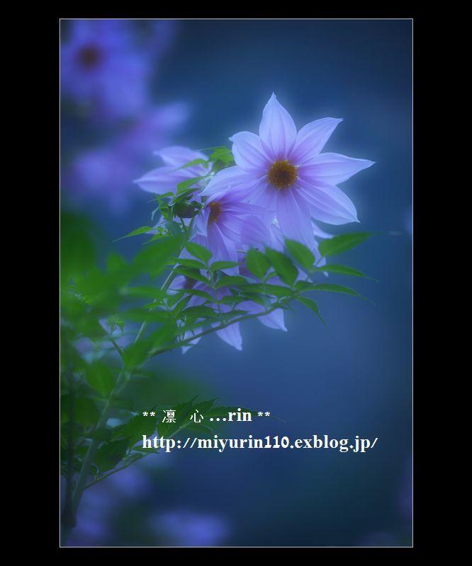 e0339924_07060876.jpg