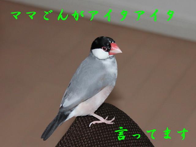 c0365734_22343349.jpg