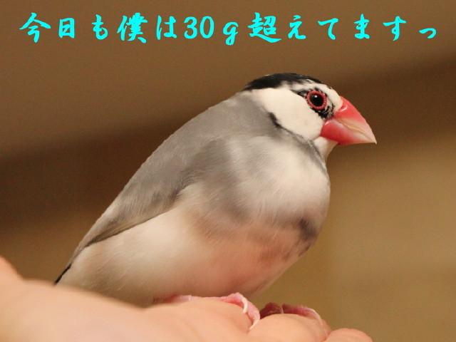 c0365734_19430803.jpg