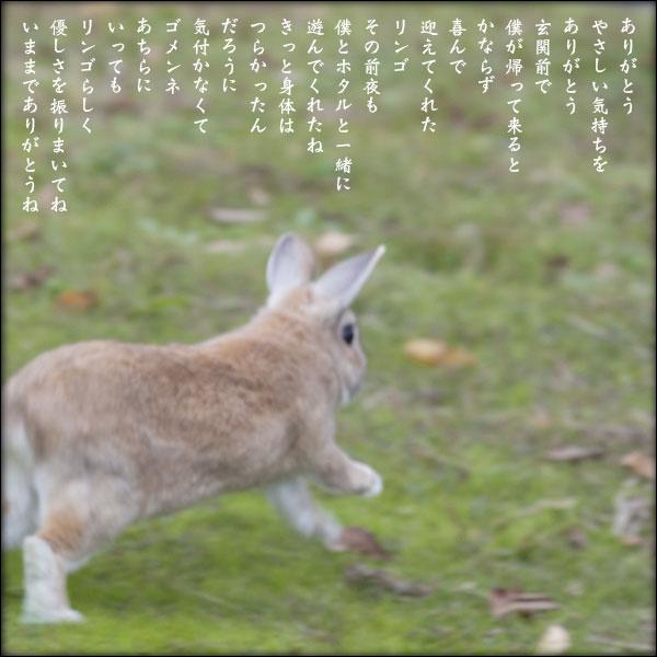 a0197968_16552781.jpg