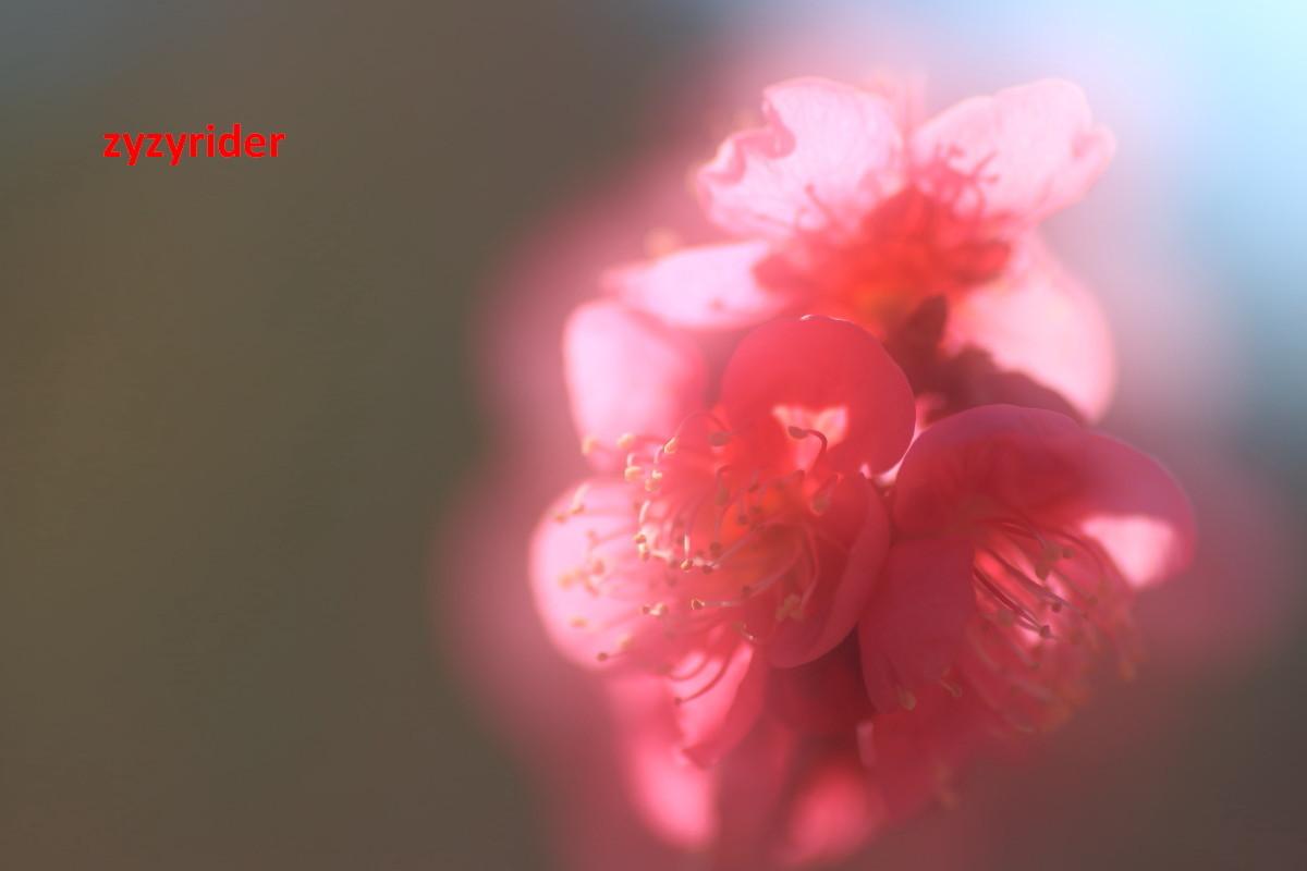 a0329801_04441101.jpg