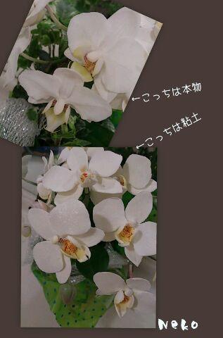a0092074_21564324.jpg