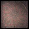 a0111371_1694182.jpg
