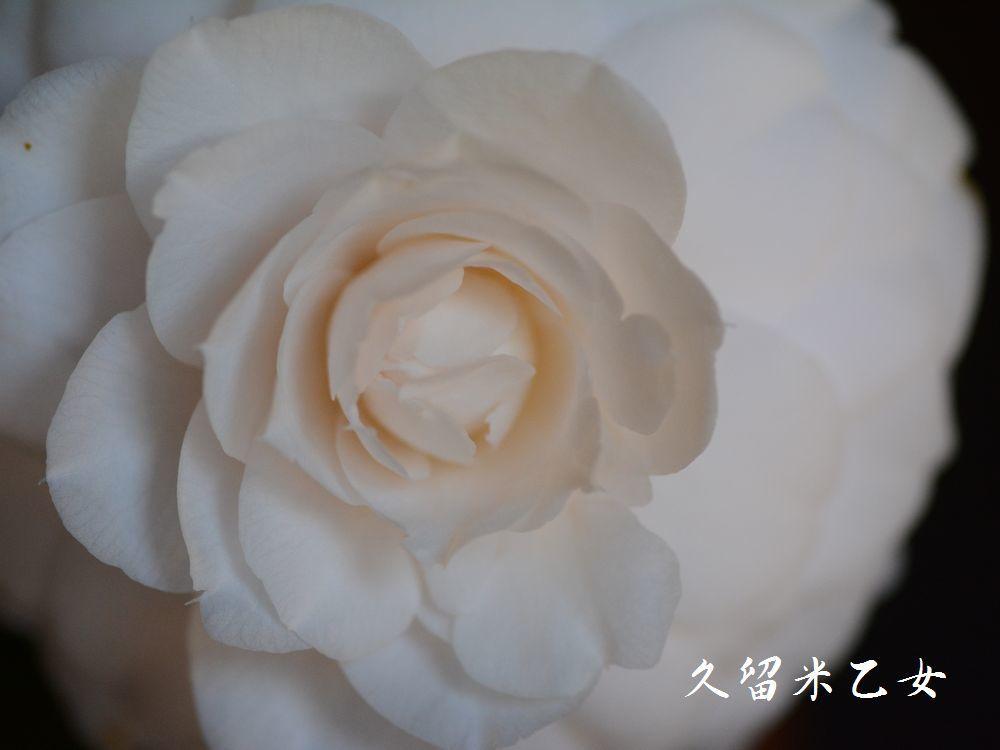 e0340143_13342074.jpg