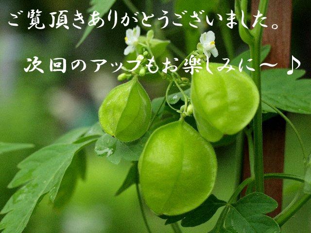 c0008502_16402937.jpg