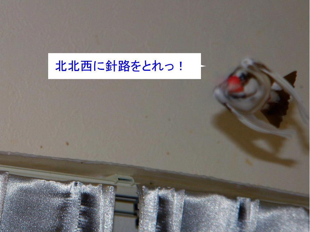 a0019545_21281114.jpg