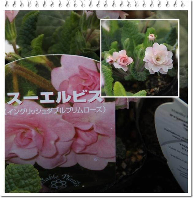 c0325701_14345949.jpg