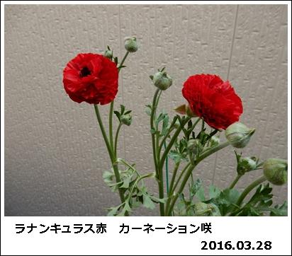 e0033229_18292711.jpg