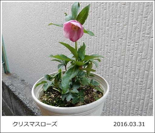 e0033229_1836211.jpg