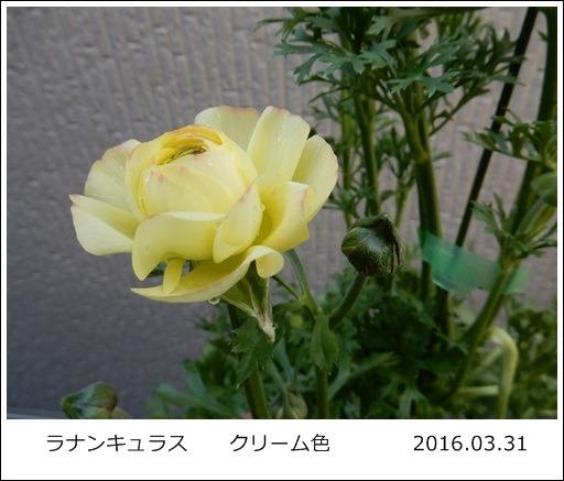 e0033229_18554630.jpg