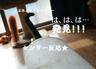 a0348473_13004638.jpg