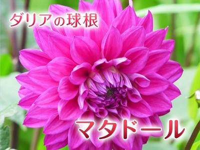 a0254656_184532.jpg