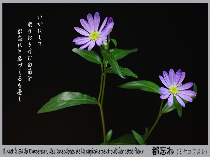 c0009981_1663033.jpg