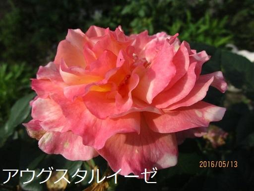 a0143388_13253033.jpg