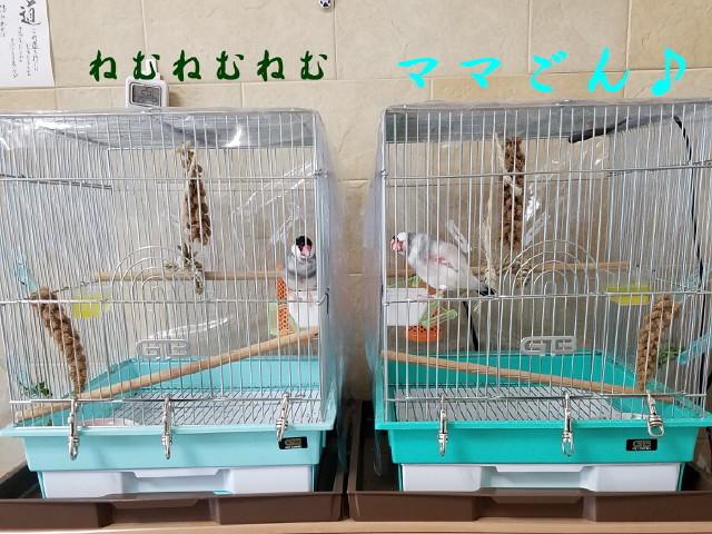 c0365734_20010693.jpg