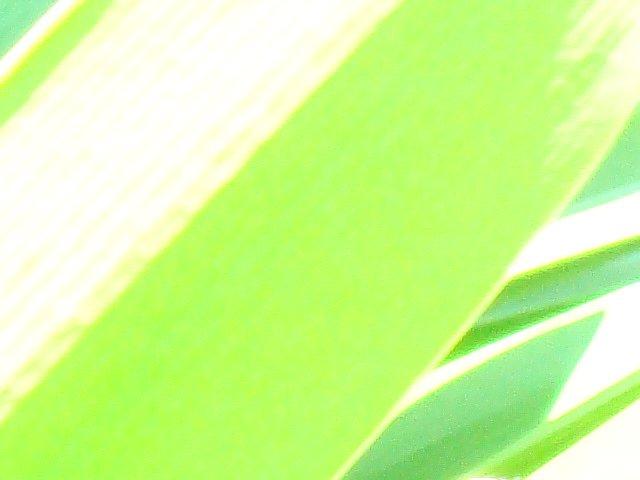 a0019022_257227.jpg